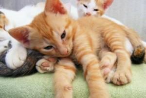 Garde d'animaux à domicile : deux chats