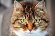 Tarifs des visites de chat à domicile : formule C