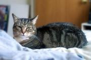 Tarifs des visites de chat à domicile : formule A