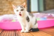 Tarifs des visites de chat à domicile : formule D