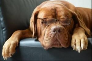 Garde d'animaux à domicile : un chien