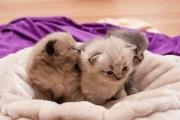 Tarifs des visites de chat à domicile : formule B
