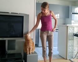 Visites de chat à domicile : caresses