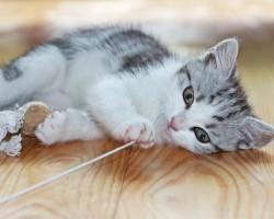 Cat-sitting : jeux