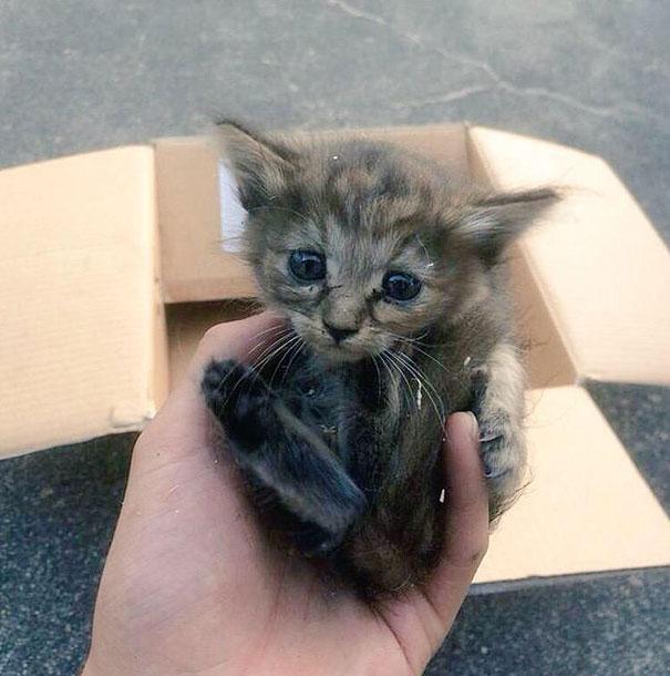 Komari, la chatte qui se prenait pour un furet