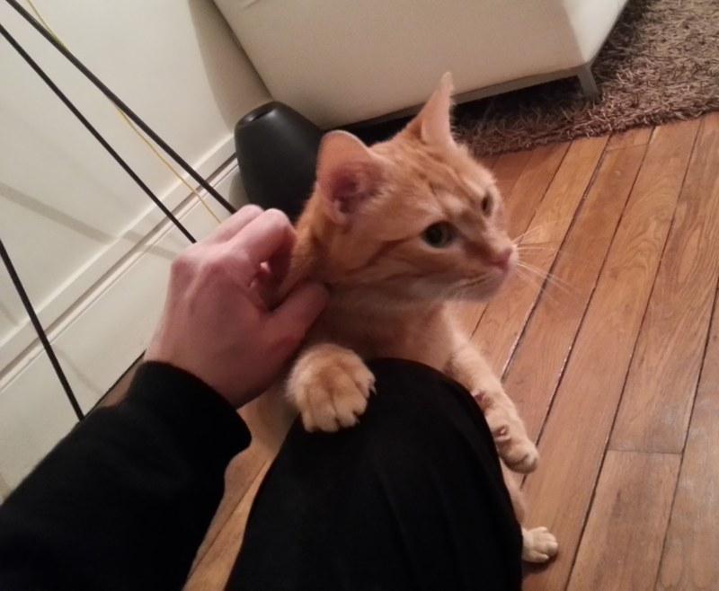 Hector le chat gratouillis