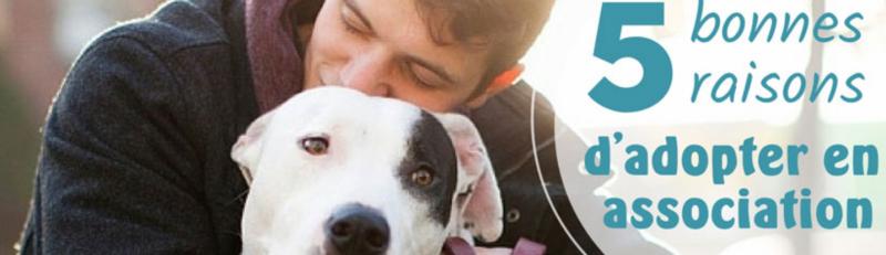 5 bonnes raisons d'adopter un chat ou un chien