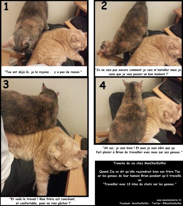 Travailler avec un chat au bureau