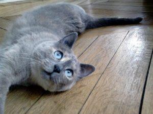 Cat-sitting - Visites à domicile