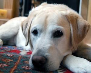 Promenades de chien : en attendant d'être sorti