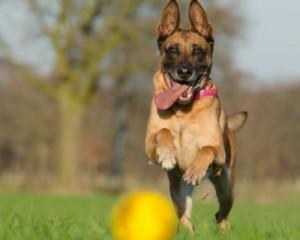 Promenades de chien sportives
