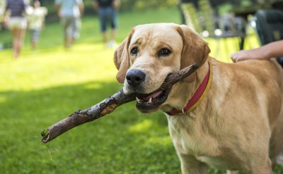 promenade de chien sportive 2
