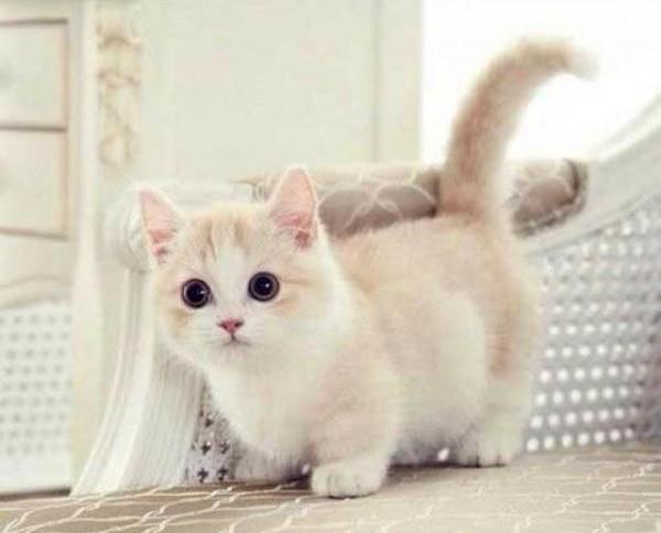 Quel age a mon chat ?