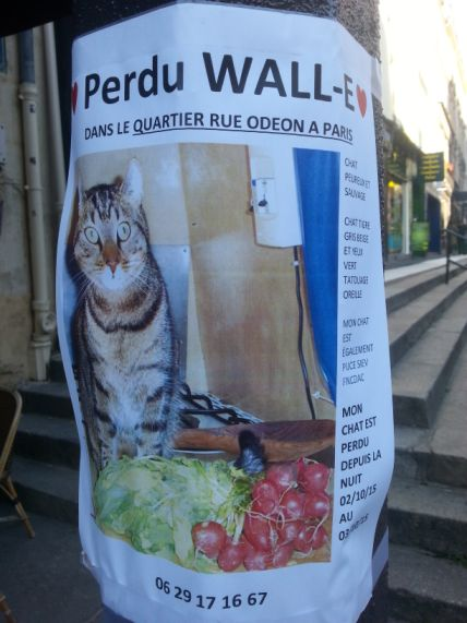 Chat perdu à Paris (Odéon – 6e arrondissement)