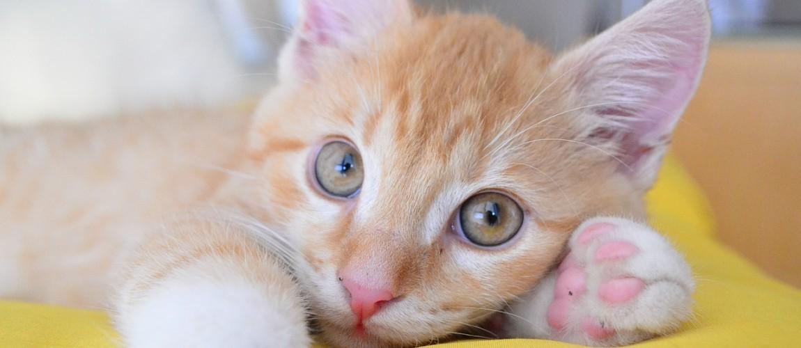 Un beau chaton