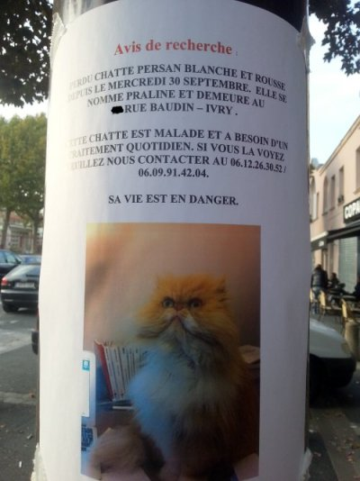 Chatte perdue à Ivry-sur-Seine – Praline