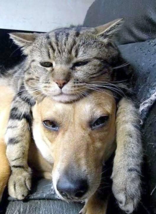 1 chat se repose sur la tête d'un chien 8