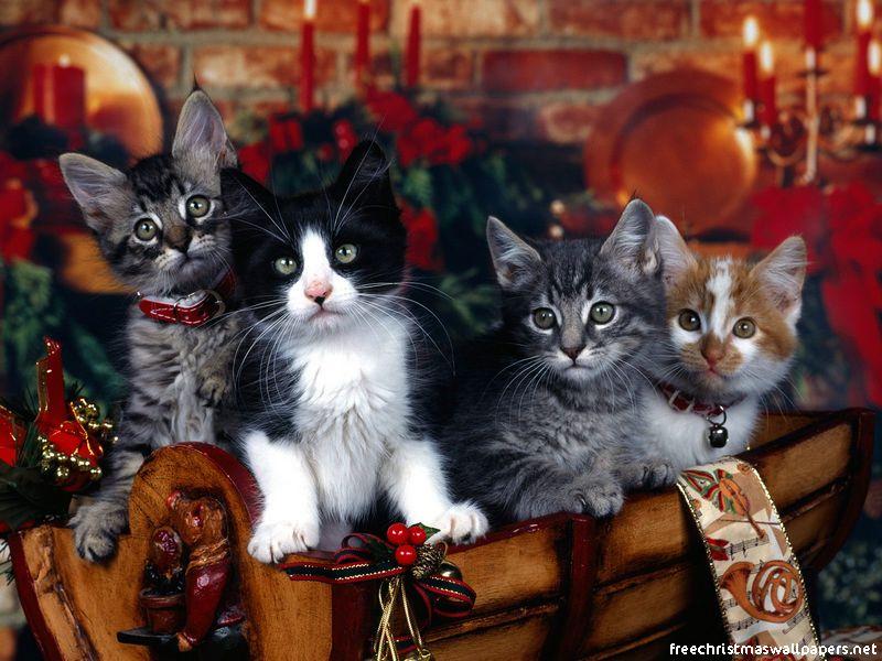 4 chats de noël