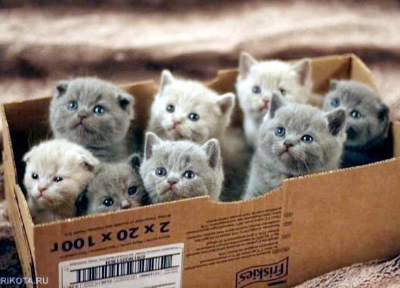 Carton de chatons 5