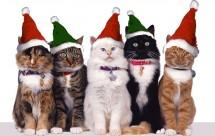 Tirage au sort de Noël MonChatEstRoi