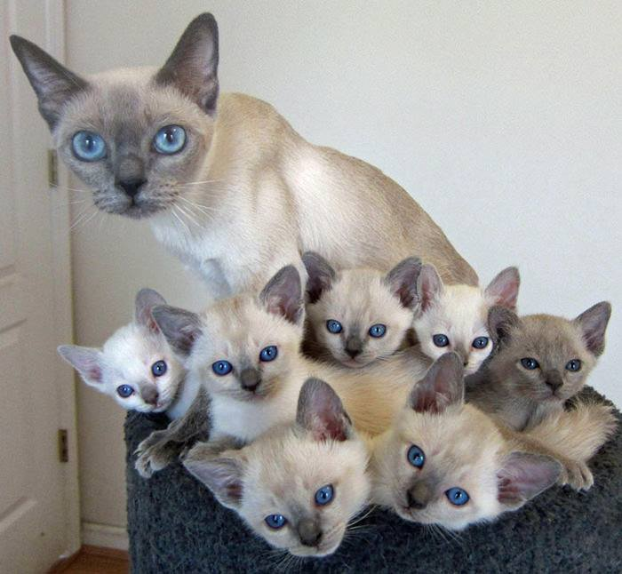 Chatte et ses 7 chatons 6