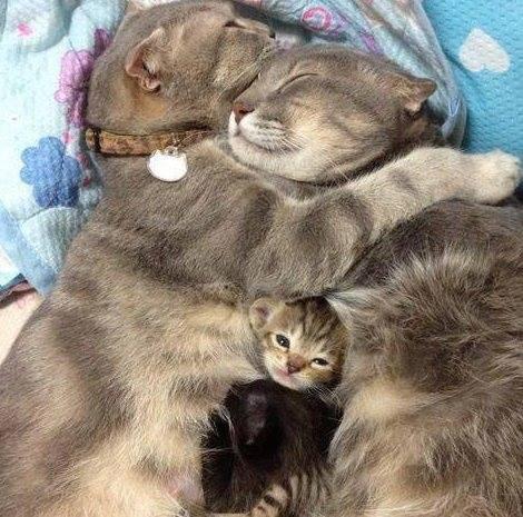 Couple de chats et leur chaton 7