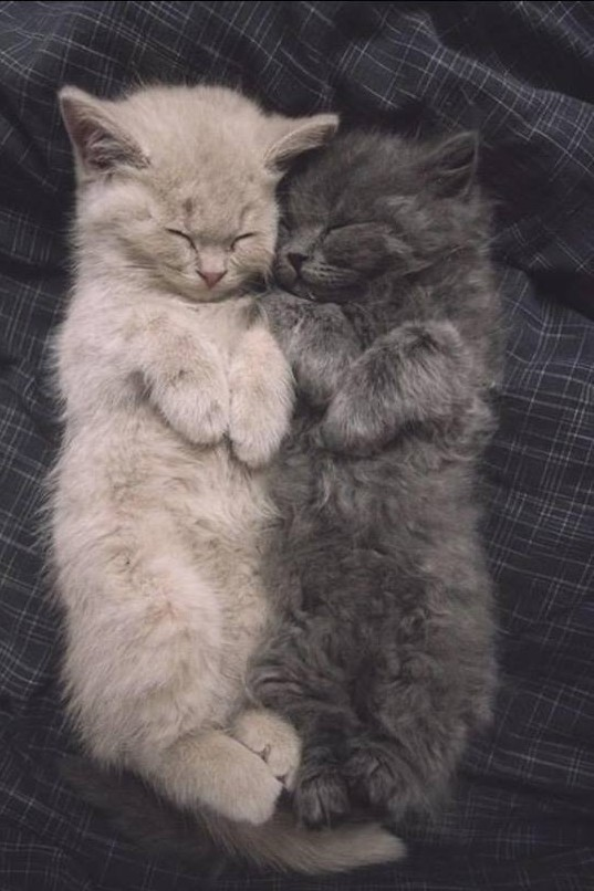 câlin de chatons 3