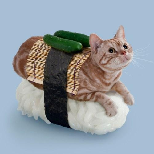 chat-sushi cornichons