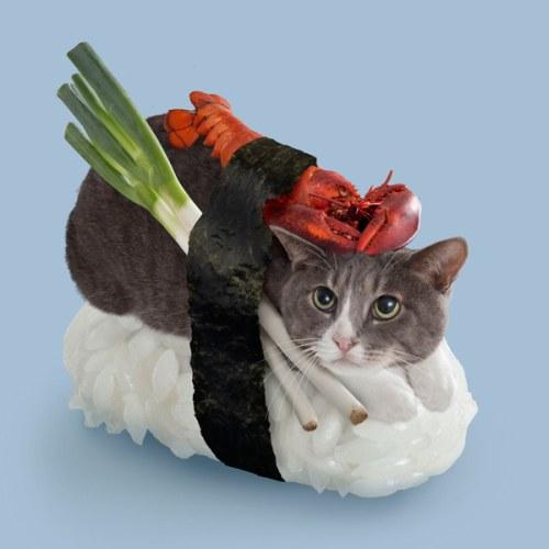 chat-sushi homard
