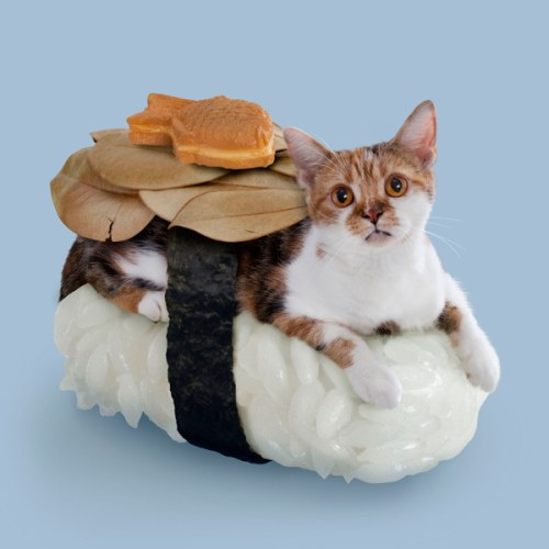 chat-sushi poisson