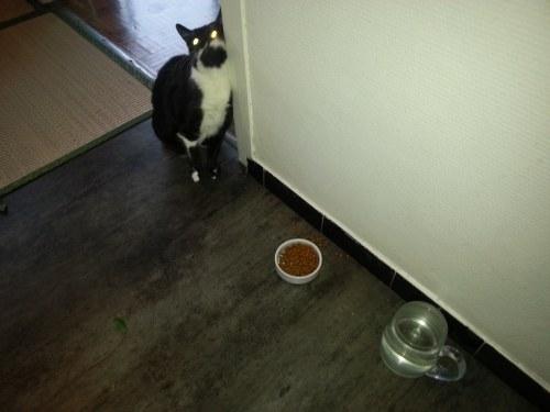 Visite à domicile Paris 13 - Kiku attend sa pâtée