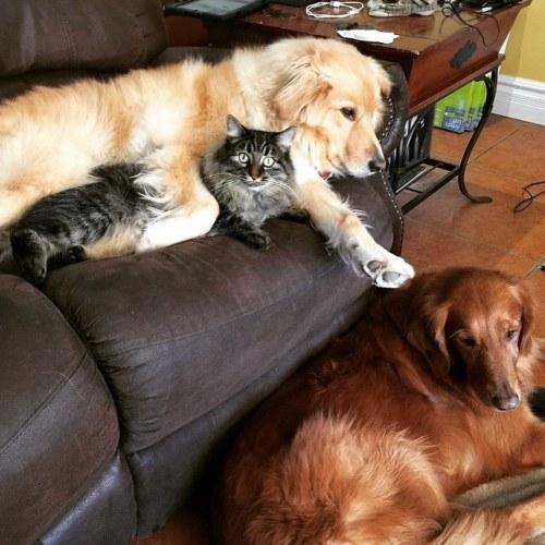 Amitié chien chat - 1 chat et 1 chien sur un canape