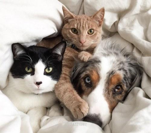 Amitié chien chat - 2 chats et 1 chien
