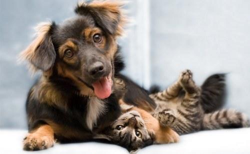 Amitié chien chat  - Calin