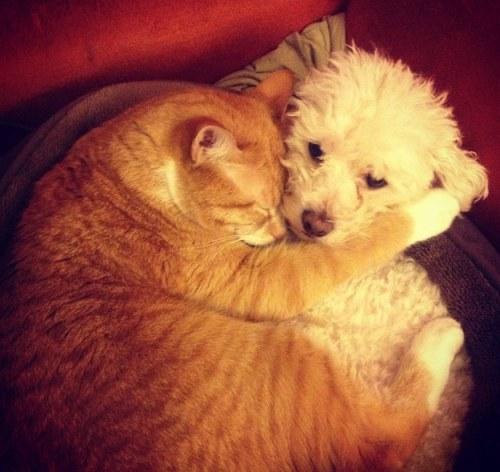 Amitié chien chat - Chat enlace un chien