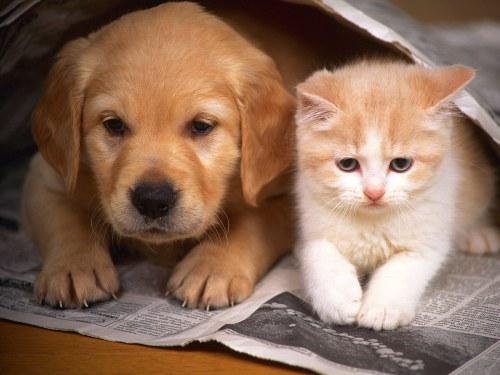 Amitié chien chat - Chat et chien cote a cote