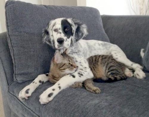 Amitié chien chat - Chien qui enlace un chat