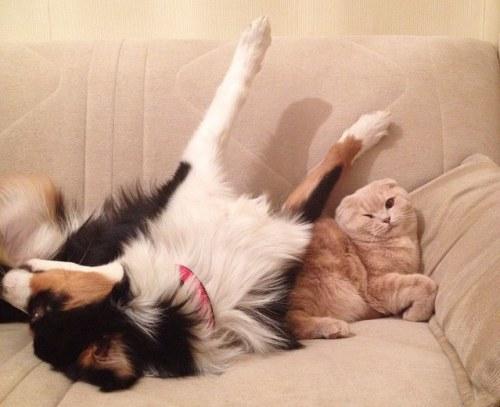 Amitié chien chat - Chien qui prend ses aises
