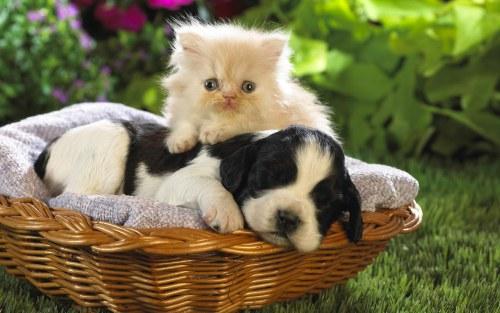 Amitié chien chat - Dans un panier