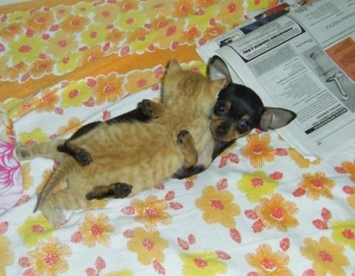 Amitié chien chat - Gros calin