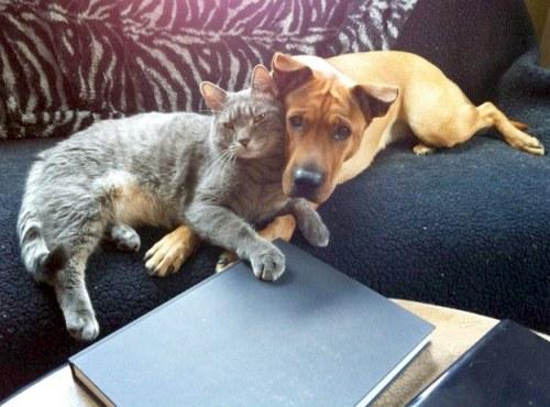 Amitié chien chat - Tete a tete