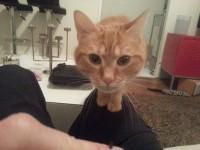 Hector, chat client MonChatEstroi à Paris 12e
