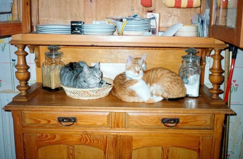 Biscotte, Poil de Carotte et Samy