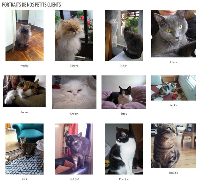 Catsitting - Nos petits clients