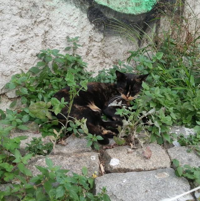 chat-dans-la-verdure