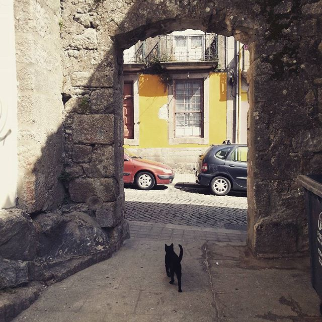 chat-noir-ruelle-porto