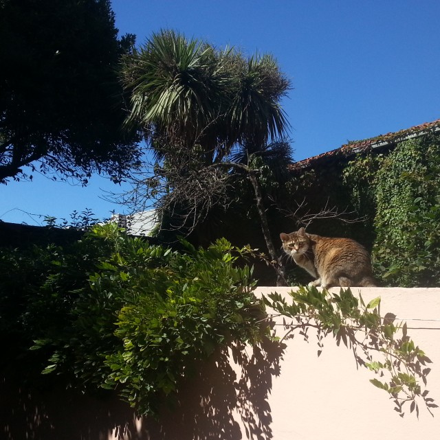 chat-sur-un-muret-porto