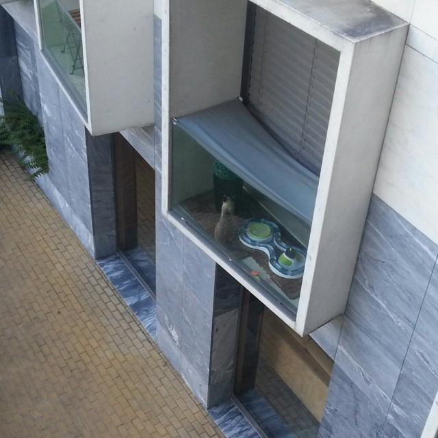 un-chat-a-la-fenêtre-Porto