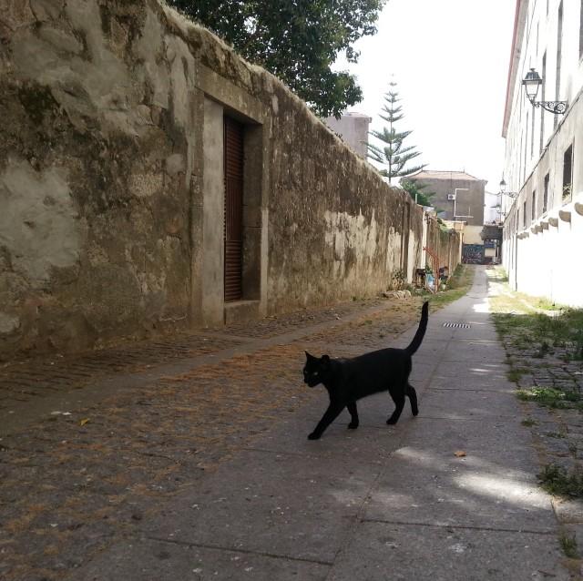 un-chat-noir-dans-une-ruelle-de-porto