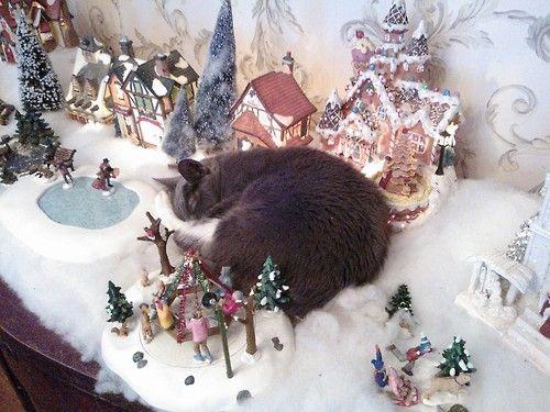 chat-allonge-dans-creche-de-noel